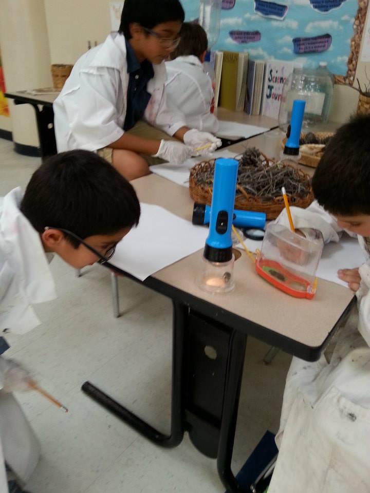 Students conducting experiments